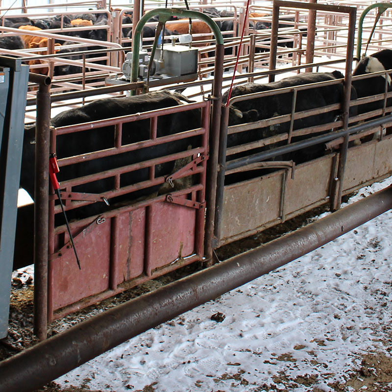 Livestock Auction every Thursday